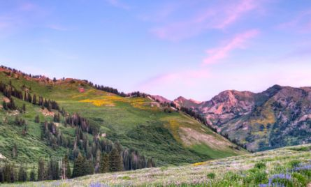 Albion Basin in Morning