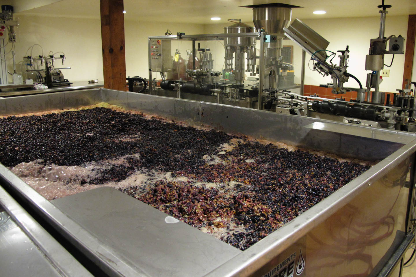 Wine grapes ready for the presses