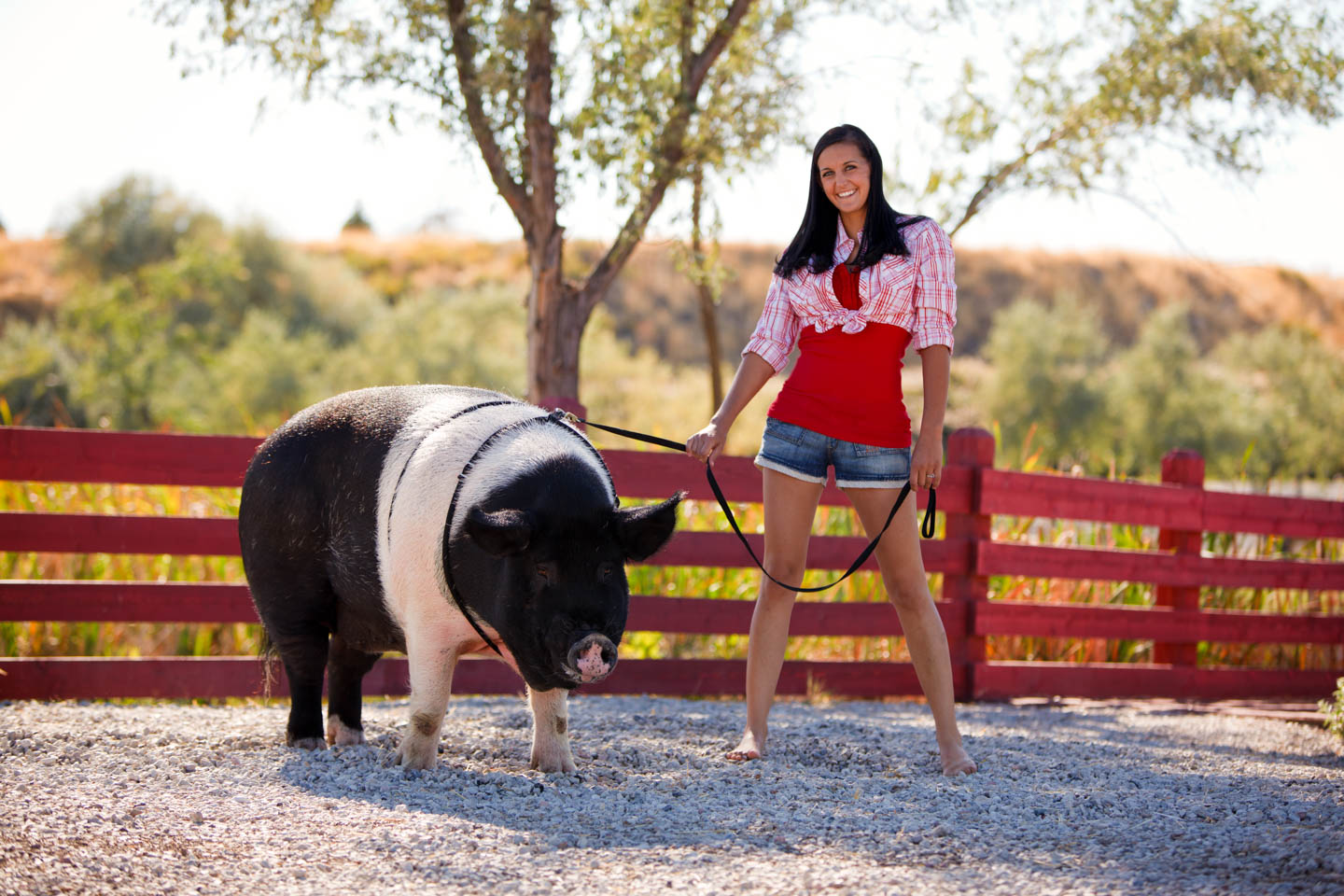 Sally the Pig and Jessica at Gardner Village's petting zoo