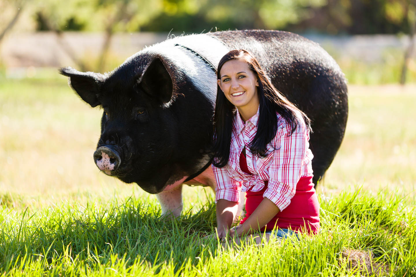 Sally the pig and Jessica in the field
