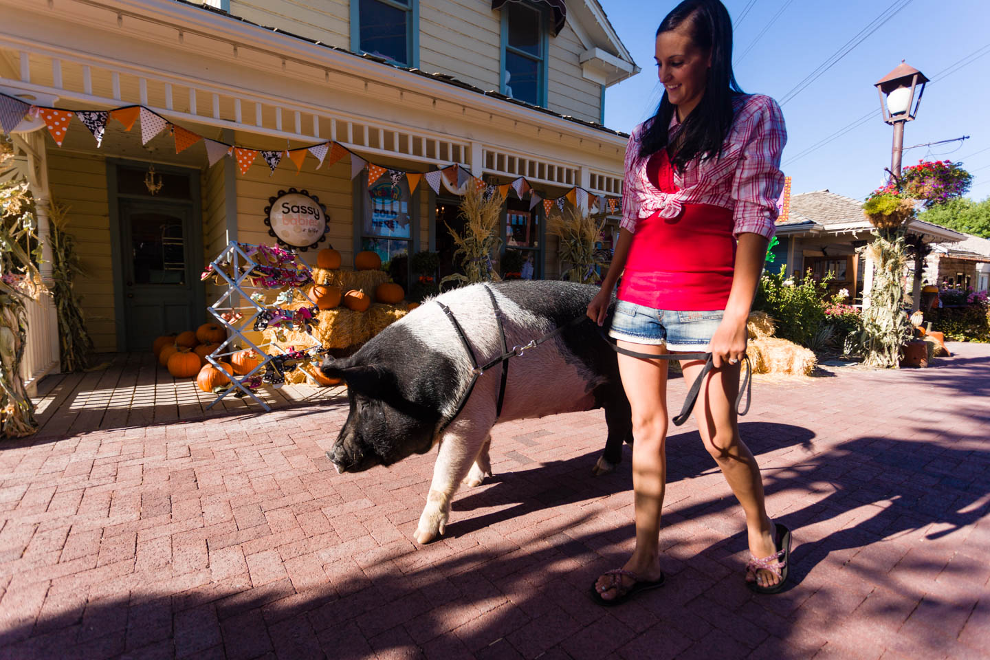 Sally the pig walks through Gardner Village