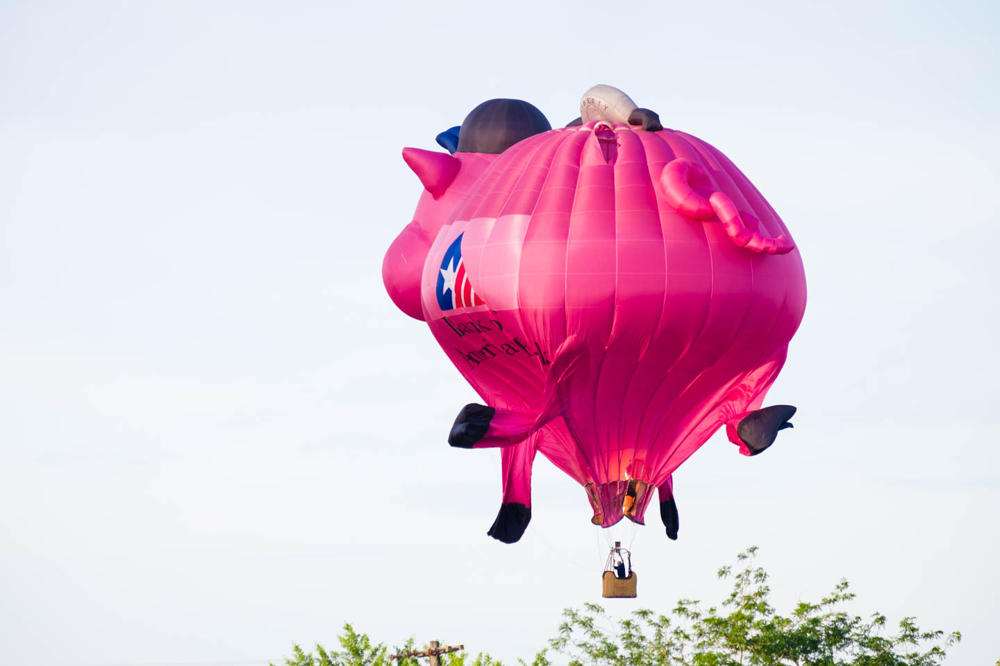 Pink pig hot air balloon comes in for a controlled crash landing