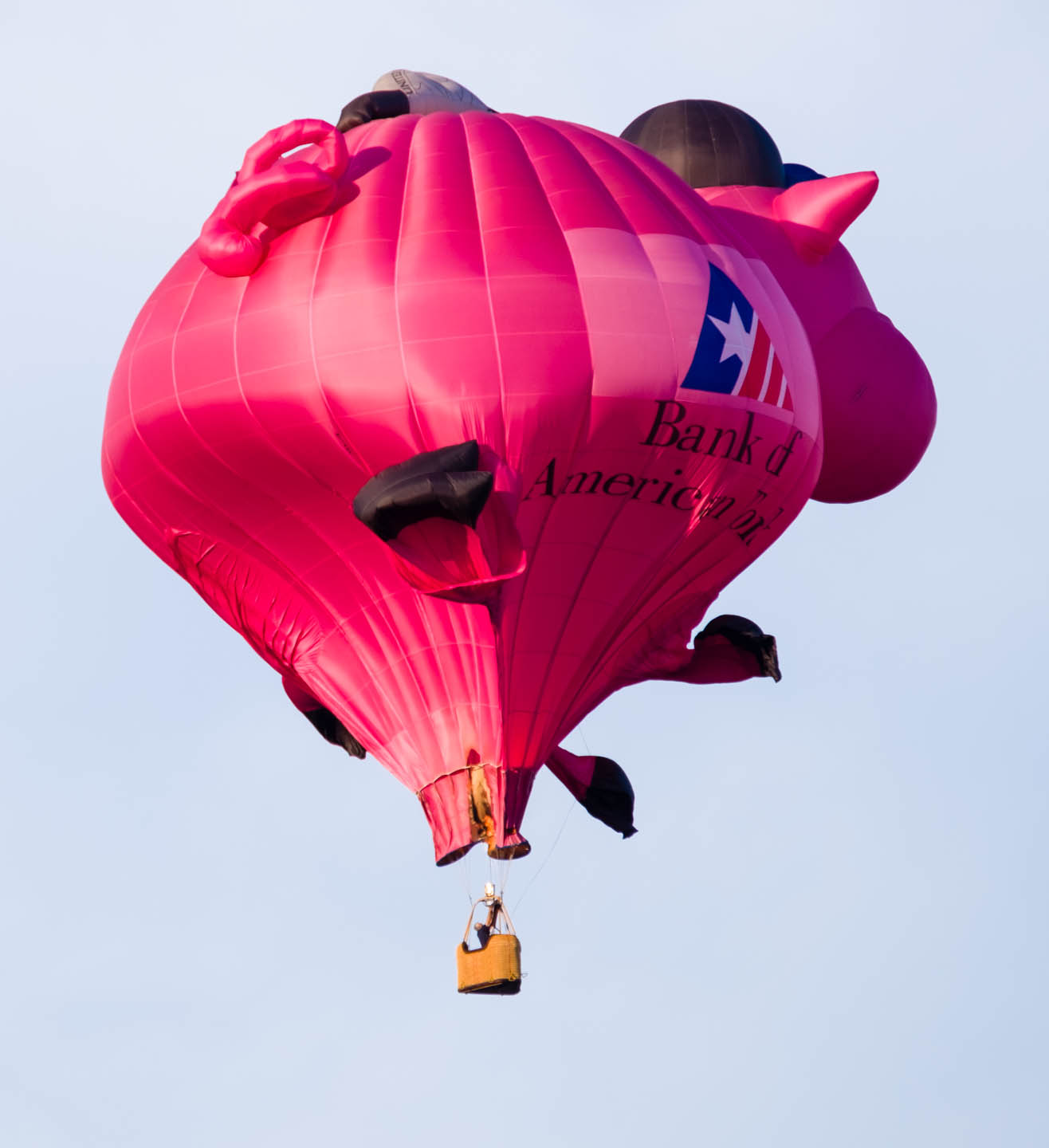 Pink pig hot air balloon photographed as it falls in Provo