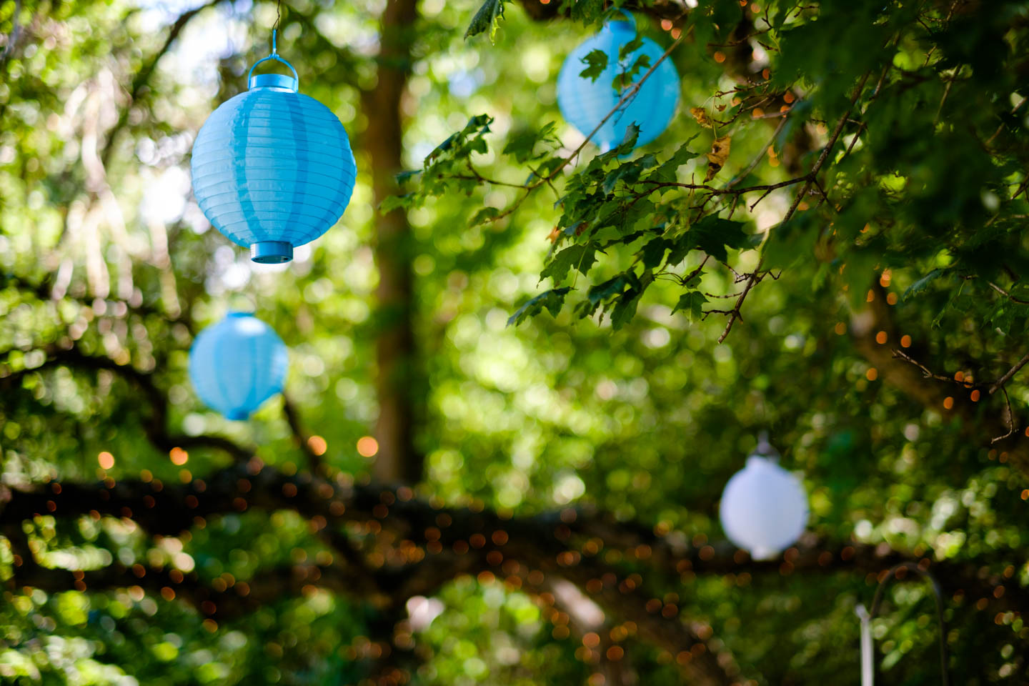 Chinese lanterns in the trees