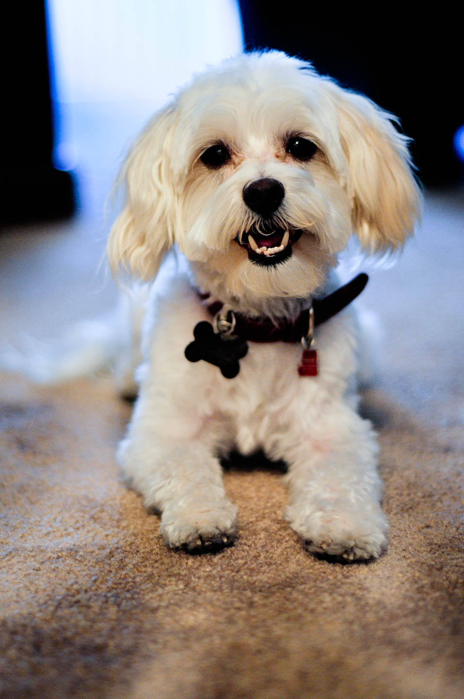 Ty's dog Maxx