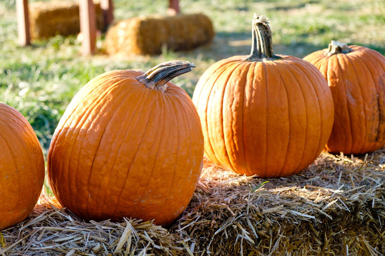Pumpkins at the pumpkin fest