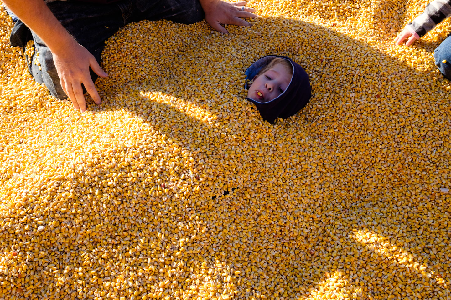 Kids buried in corn