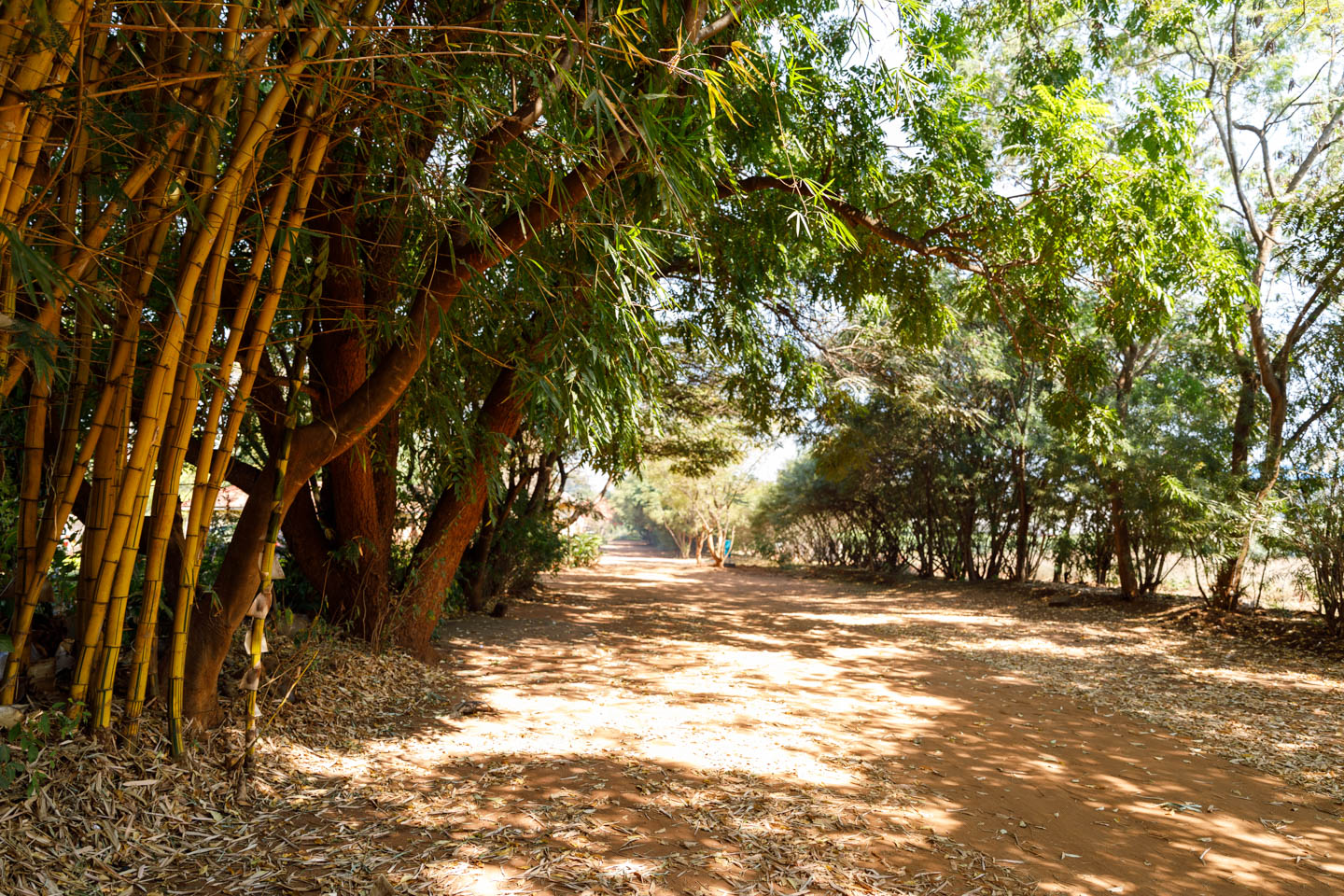 A road lined with bamboo in Malawi