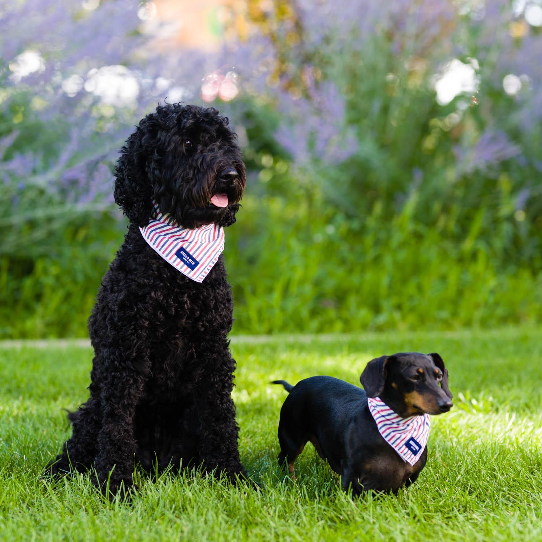 Dogs modeling bandanas