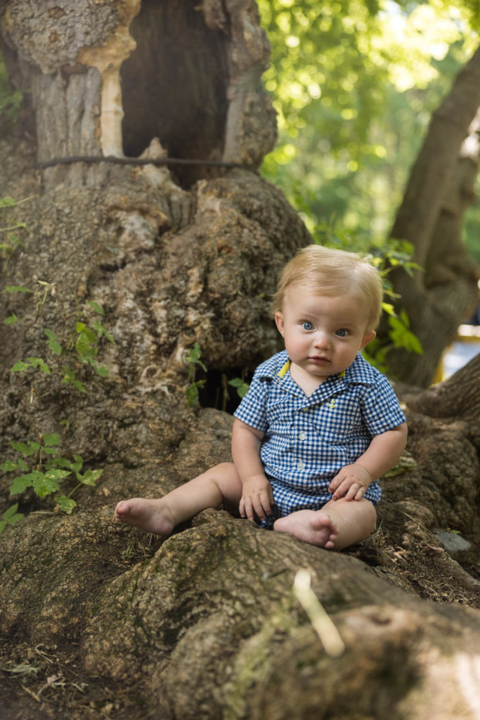 Arthur sits on a tree